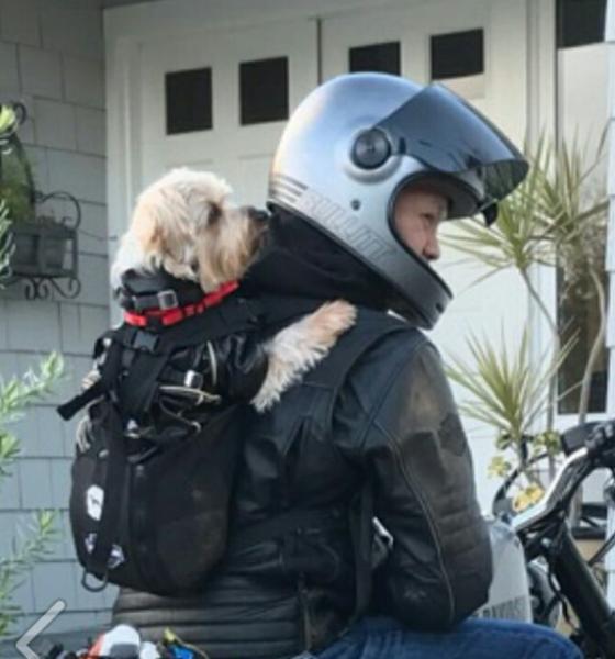 bikerdog2.png