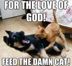 fedthecat.jfif