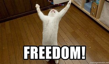 freedom1.jfif