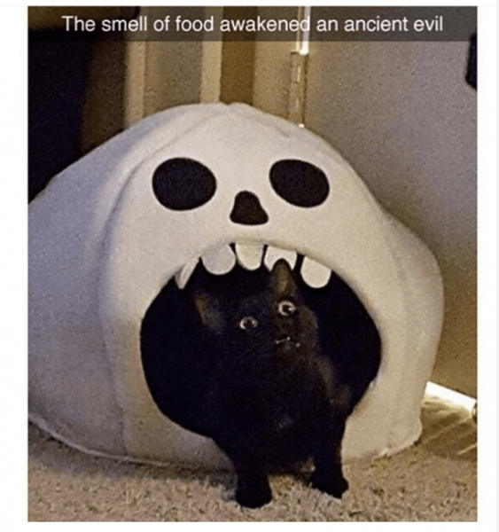 ghostcat.png