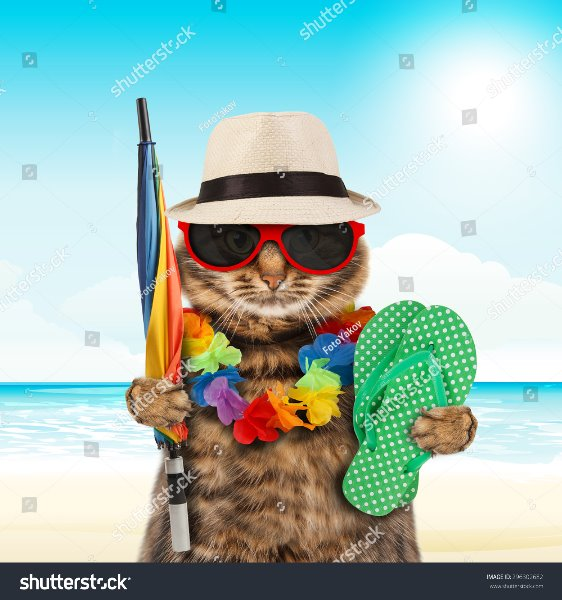 photo-funny-cat-going-on-vacation.jpg
