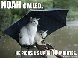 rainycats.jpg
