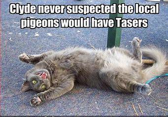 tasercat.jfif