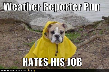weather-reporter-dog_1.jpg